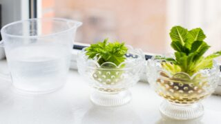 How To Grow Fruits And Veggies From Food Scraps