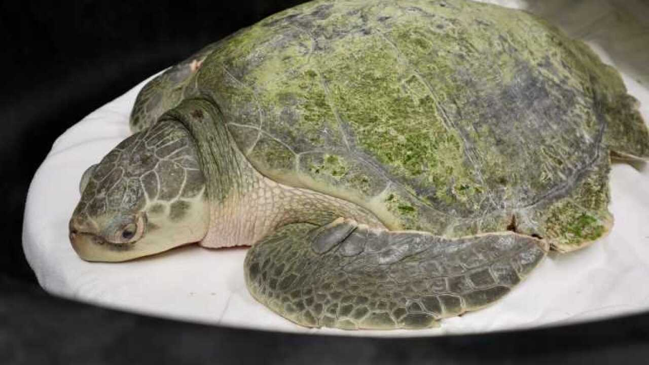 sea turtle-turtle.jpg