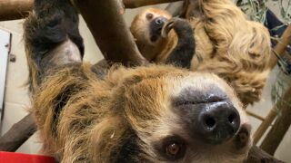 Sloth1.jpeg