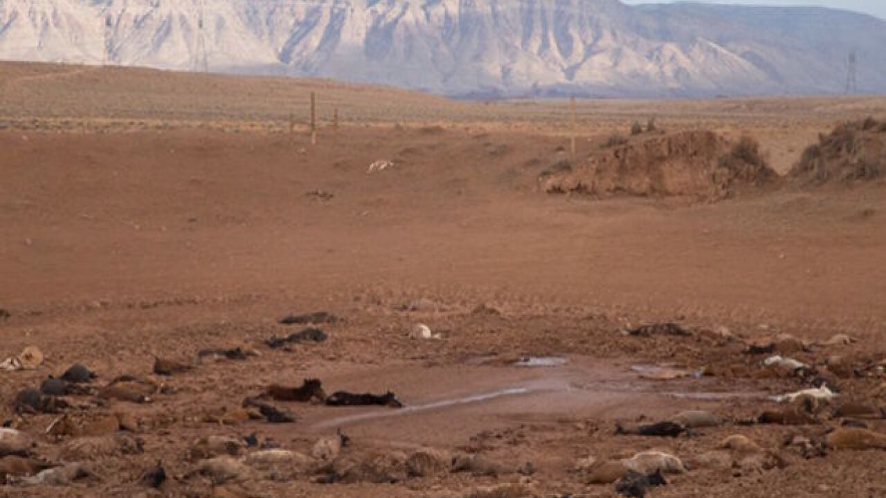 191 feral horses found dead in Navajo Nation