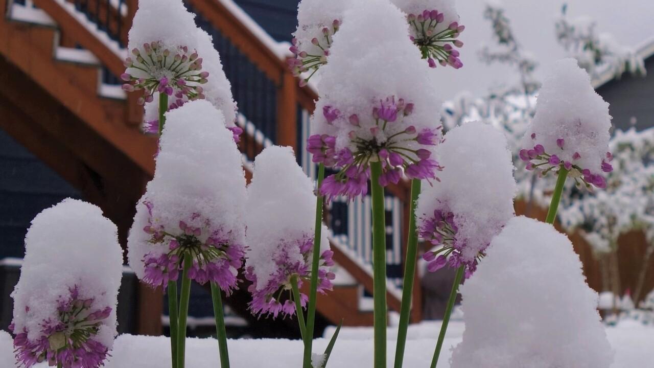 Jeff Castillo Colorado Springs snow