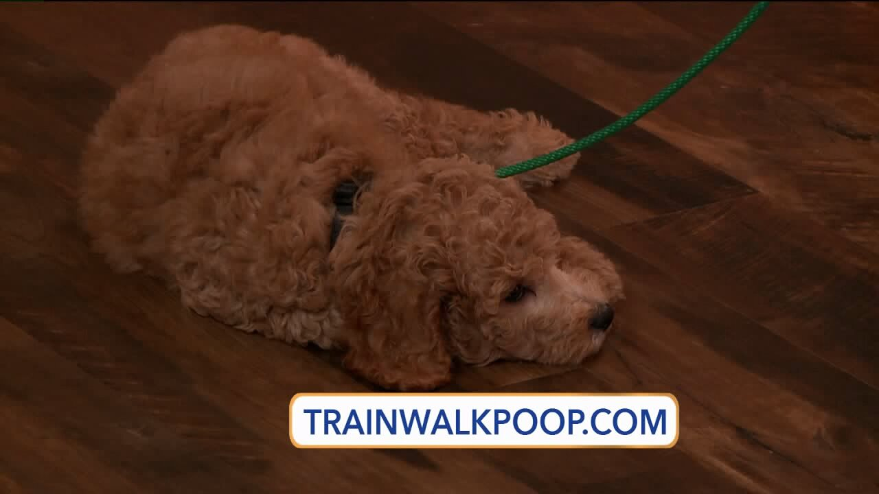 Simple ways to train your dog to dotrick