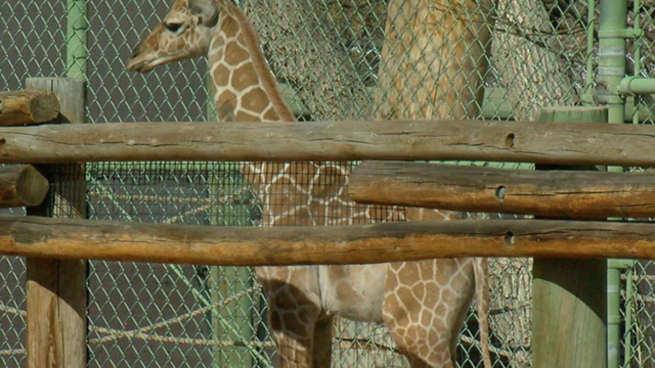 GALLERY: Dobby the giraffe's first year