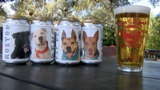 Florida brewery puts shelter dogs on beer cans to help them get adopted