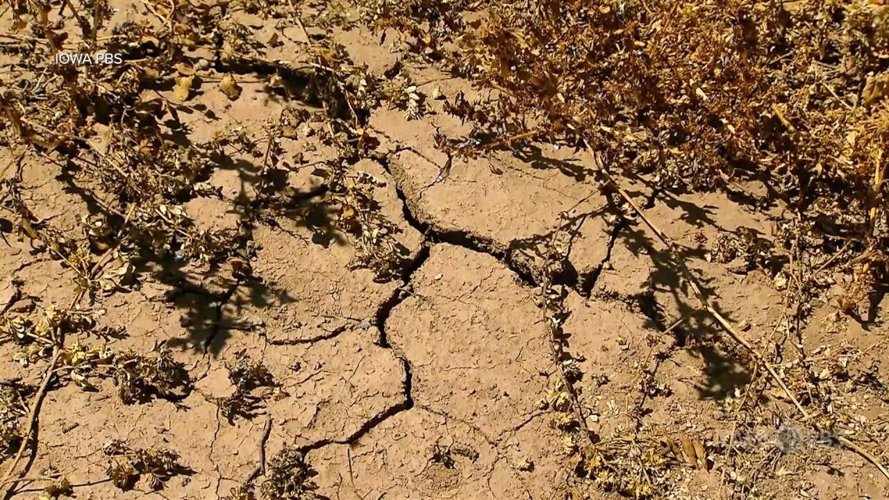 Drought Cracked Soil.jpg