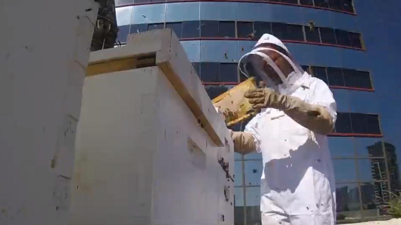 Marriott Bees.png
