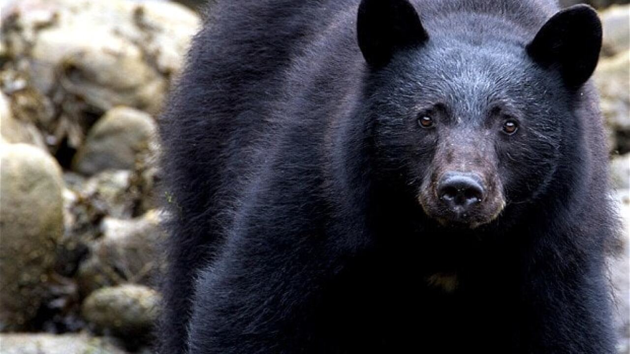Some North Carolina residents concerned after seeing black bears with missing limbs