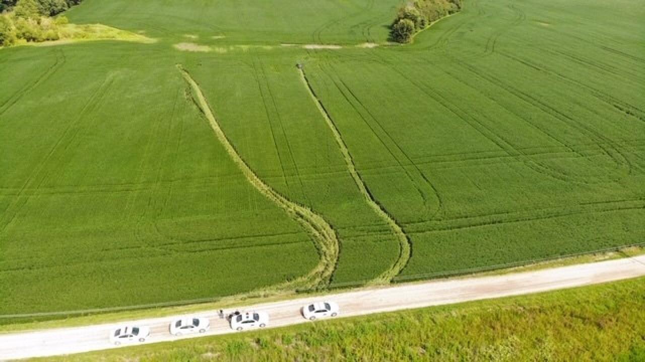 pursuit ends in bean field 2.jpg