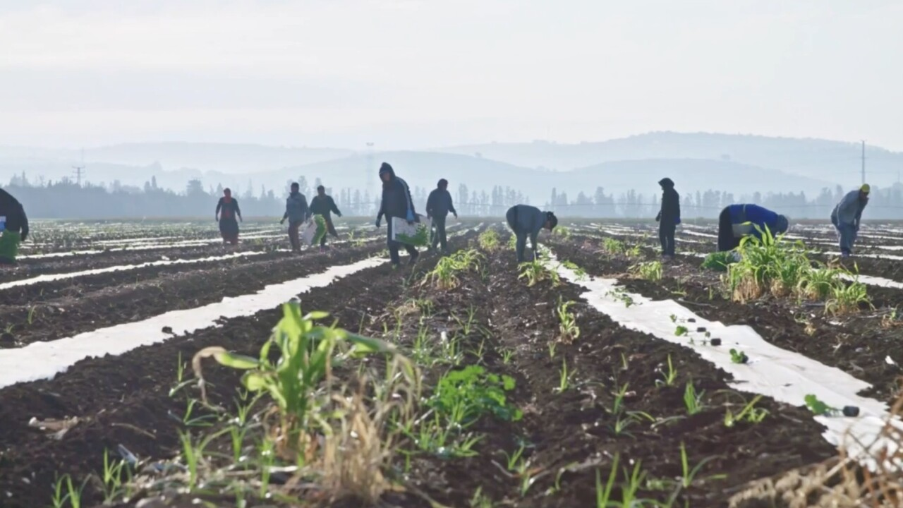 County creates safety hotline for farmworkers