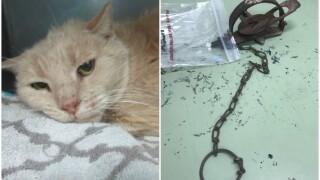 chandler cat rescued.jpg