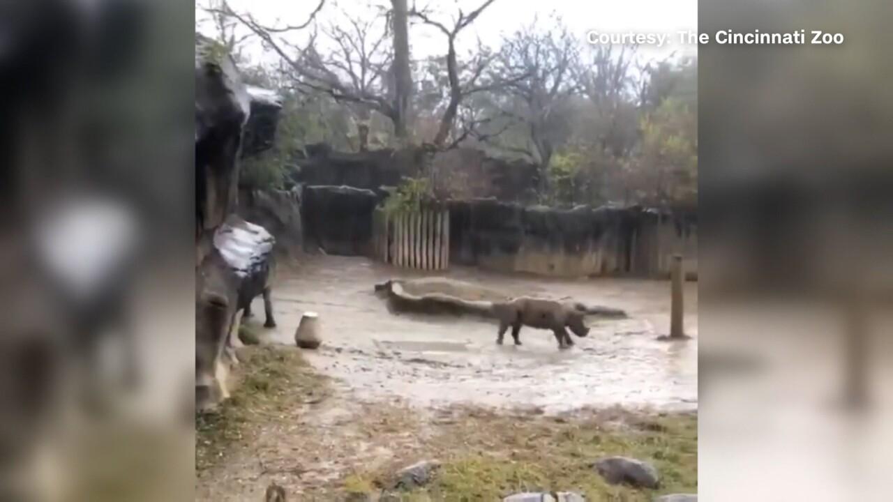 BabyRhino.jpg