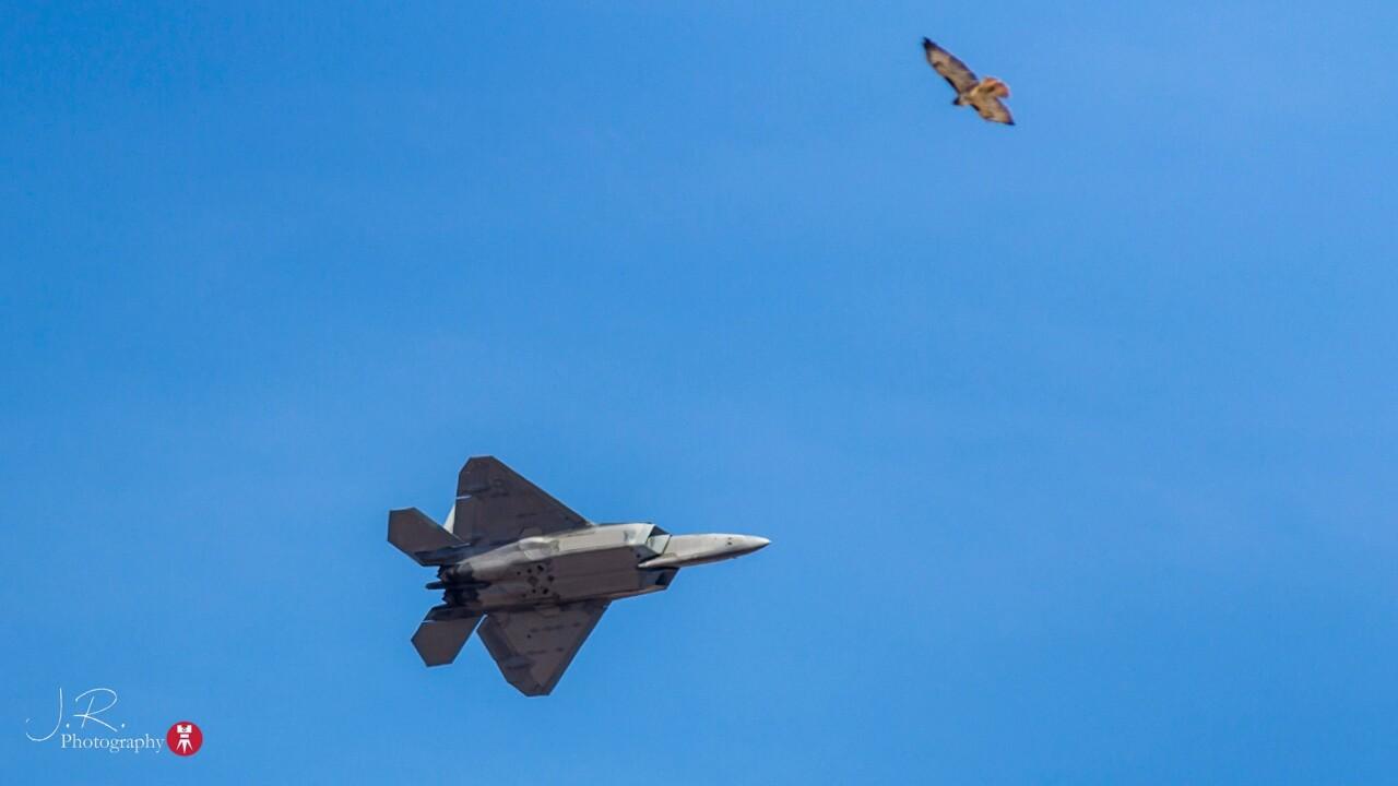 F-22 Raptor and Hawk