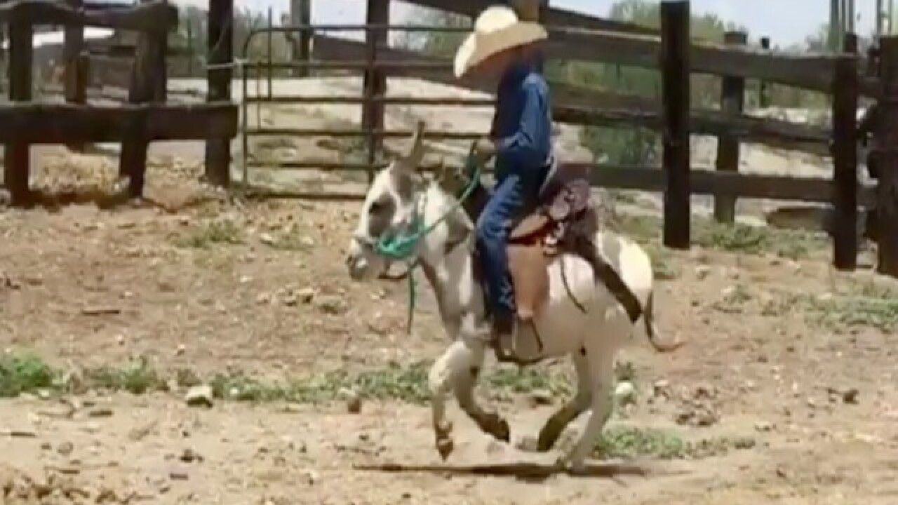 GIDDYUP! Tiny cowboy rides burro best friend