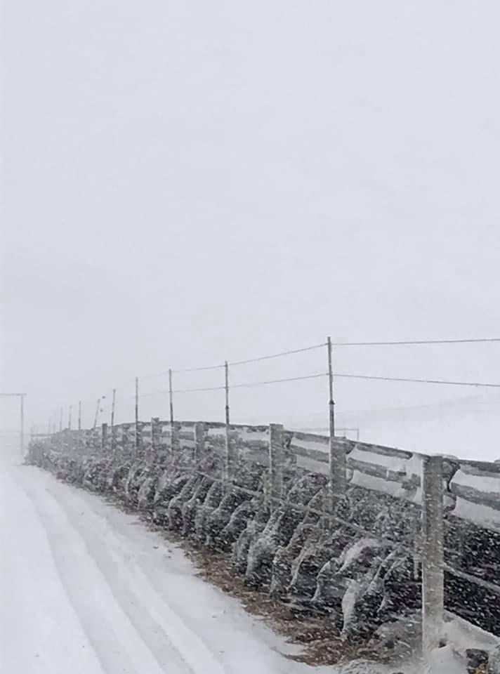 frost, tanner 2.jpg