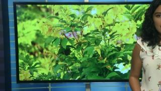 The importance of bird friendly landscaping