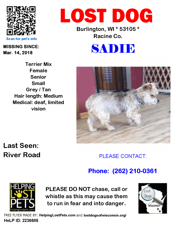 031418 Sadie Terrier Mix Senior deaf and limited vision.png