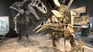Dinosaur exhibit at Denver Museum of Nature & Science