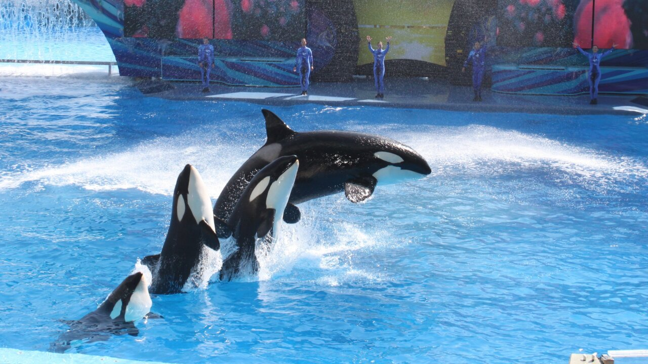 SeaWorld says it spied on animal activists