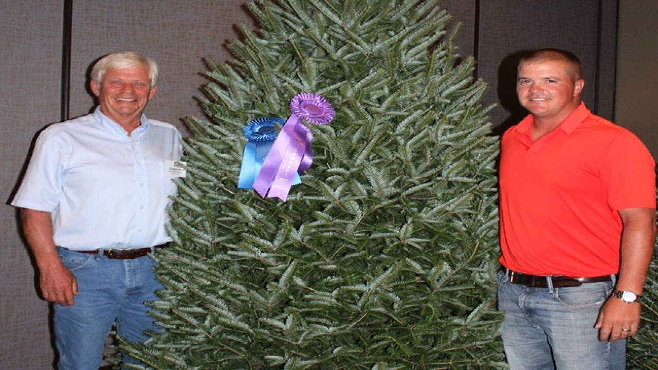 White House Christmas tree will once again come from Wisconsin