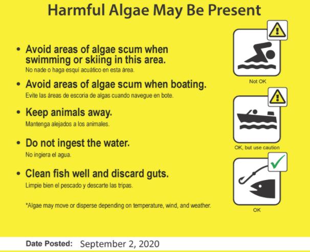 Harmful algae poster