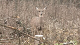 Deer in Eaton County confirmed to have EEE