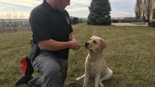 Shiloh ATF dog