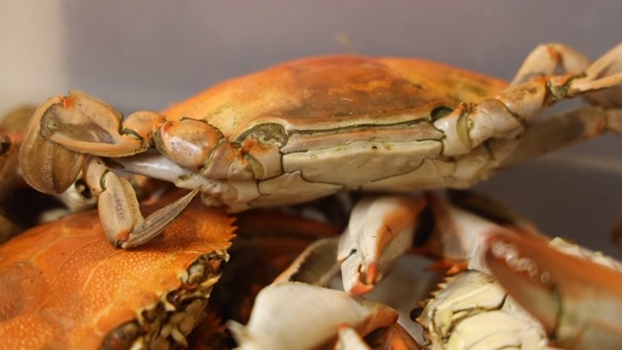 Crabs from The Boiling Pot in Rockport