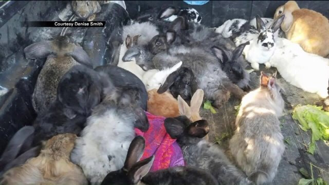 More than 100 bunnies found dead, injured on the side of road in Weber County