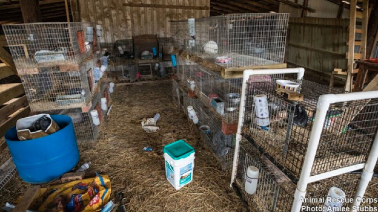 Animal rescuer nearly dies from toxic conditions