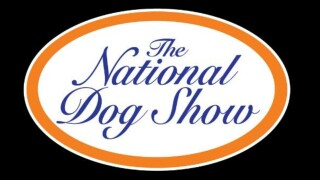 Scottish Deerhound named Claire wins Best in Show at National Dog Show