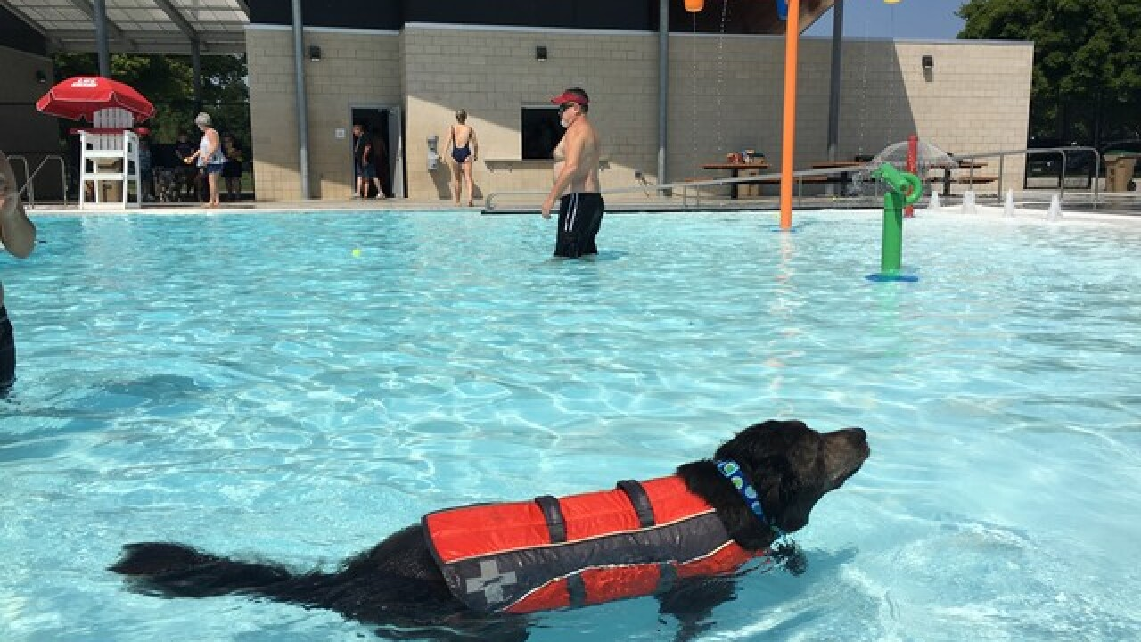 Tulsa City pools are going to the dogs