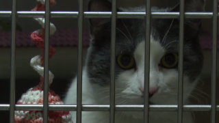 Humane Society of Western Montana seeing drop in donations