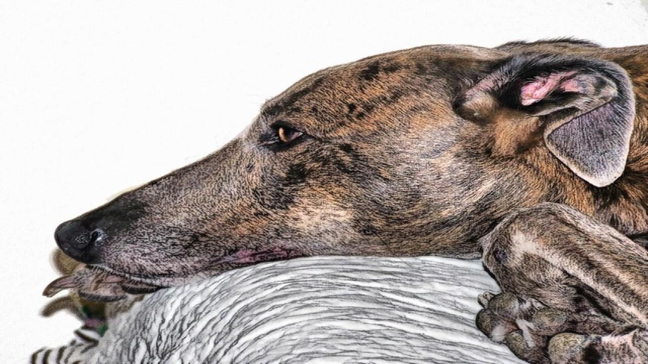 Greyhound injuries still unknown in Florida