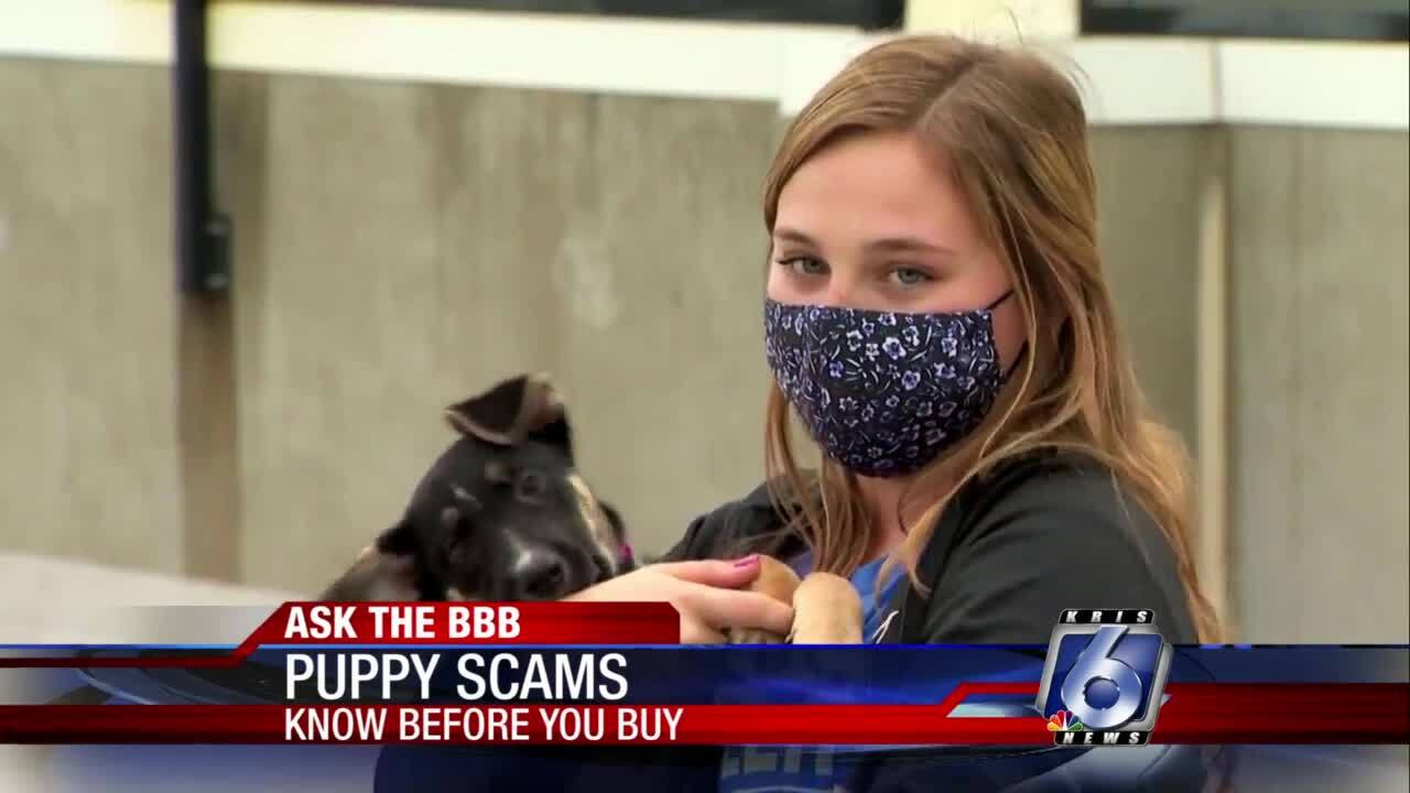 Ask the BBB: Beware puppy scams