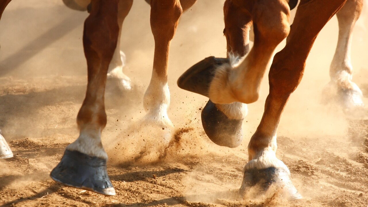 'Cold-blooded malice' At least 14 horses appear to have been fatally shot in eastern Kentucky