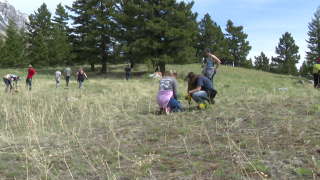 """High school students """"pull their share"""" of invasive weeds"""