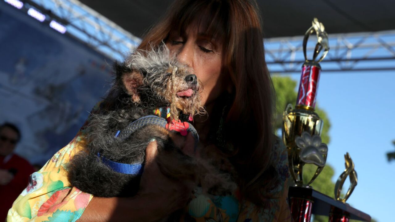2019 World's Ugliest Dog Contest: Scamp the Tramp scampers away with the prize