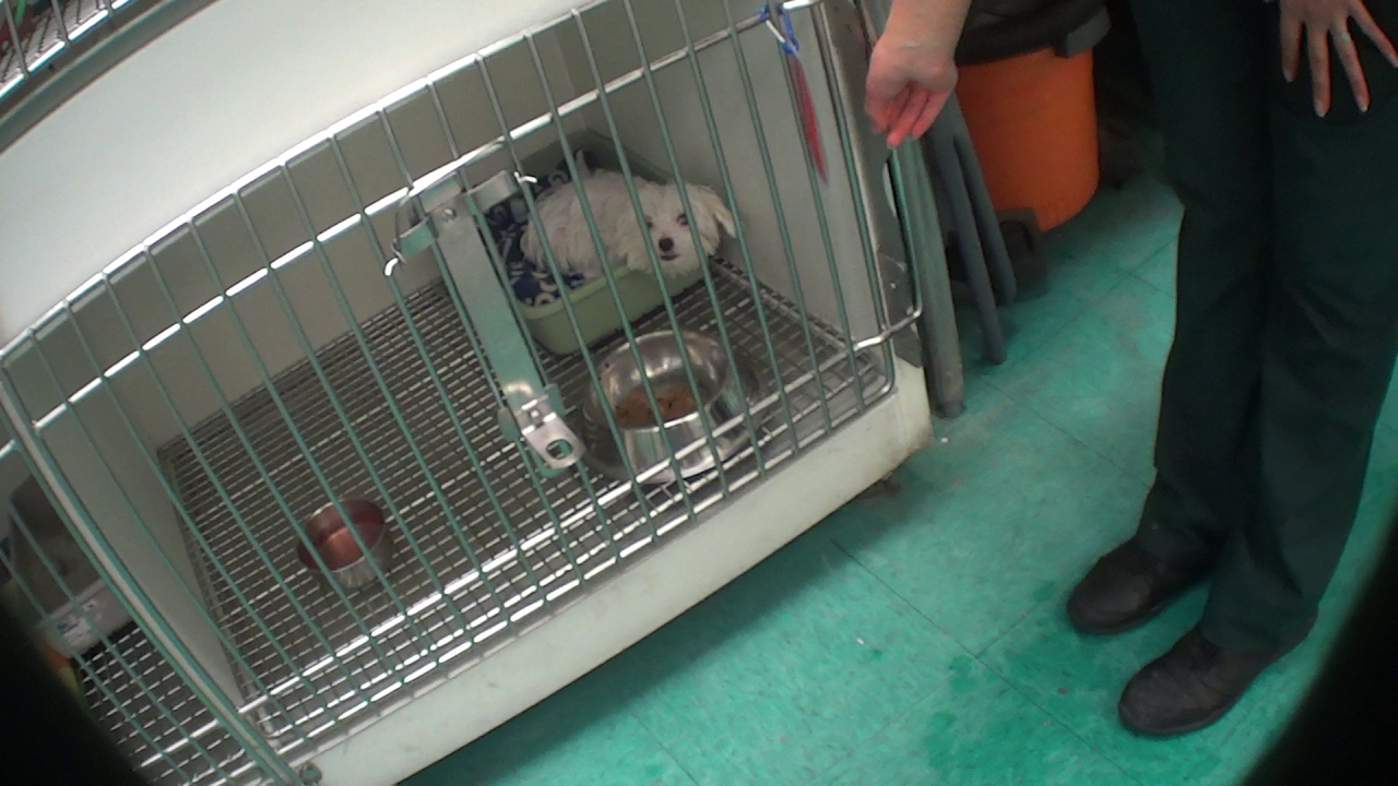 Secret video of sick puppy 'waiting to die' points to larger problem with Petland, nonprofit says