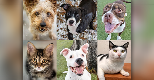 PHOTOS: 20+ adoptable pets in the Tampa Bay area for the weekend of September 21