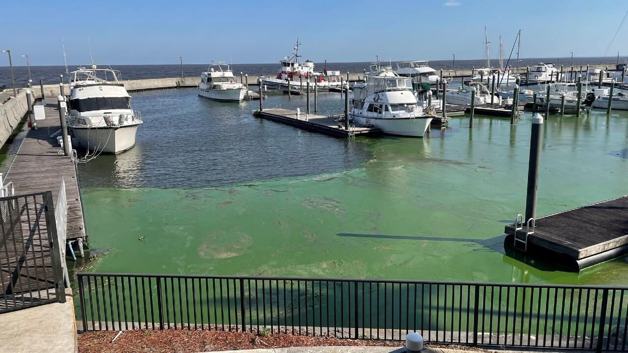 Toxic algae at the Pahokee Marina, according to the Florida Oceanographic Society, on April 22, 2021.jpg