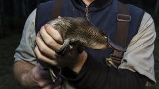 san diego zoo platypus_3.jpg