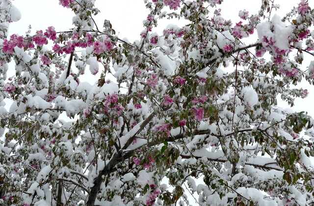 See photos from the spring storm that slammed Colorado, metro areas