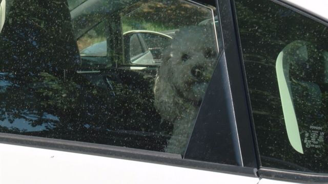 Animal Control Warns Against Leaving Pets in Cars During Summer Heat