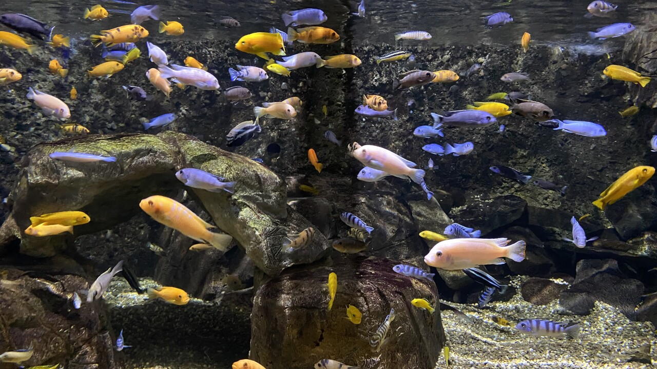 Aquarium of Niagara brings back 716 days
