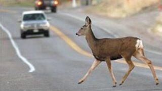 Motorcyclist hurt after hitting deer on U.S.12
