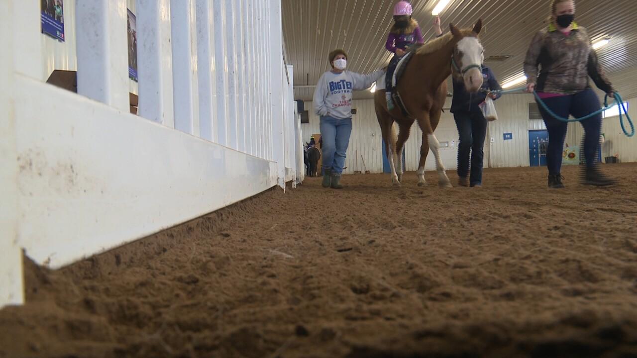 healing through horses 2