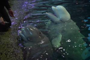 Marine Mammal study