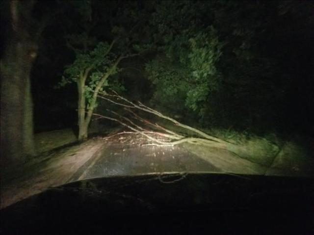 PHOTOS: Wicked rains and storms blow through metro Detroit overnight