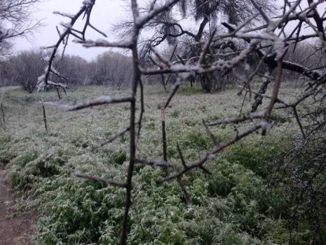 Eastside Snow Pfalzer.jpg