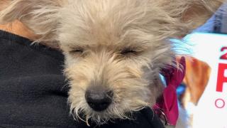 Pet of the Week: Poppy